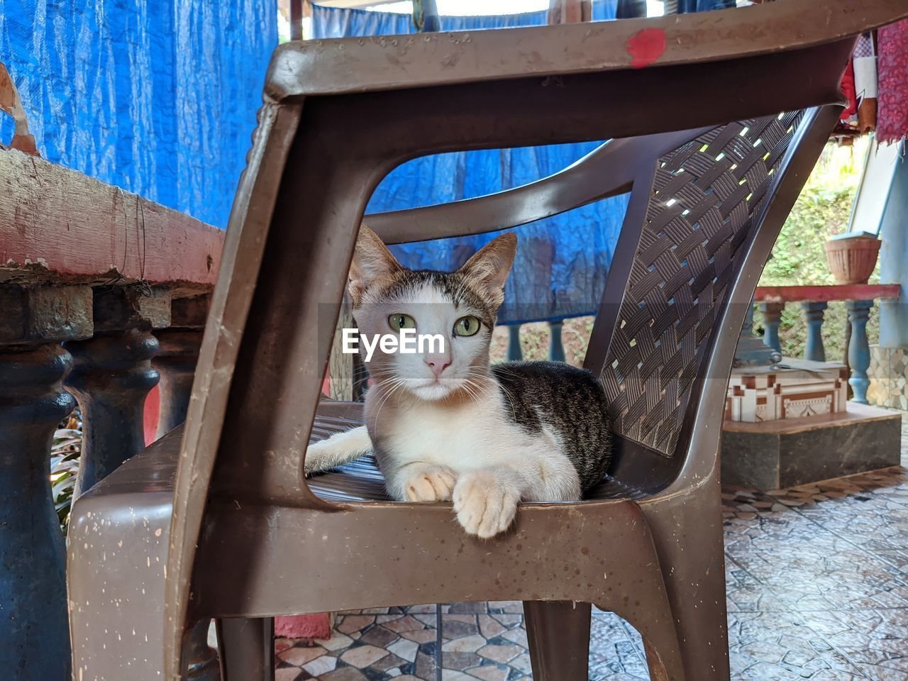 PORTRAIT OF CAT SITTING ON CHAIR IN TABLE