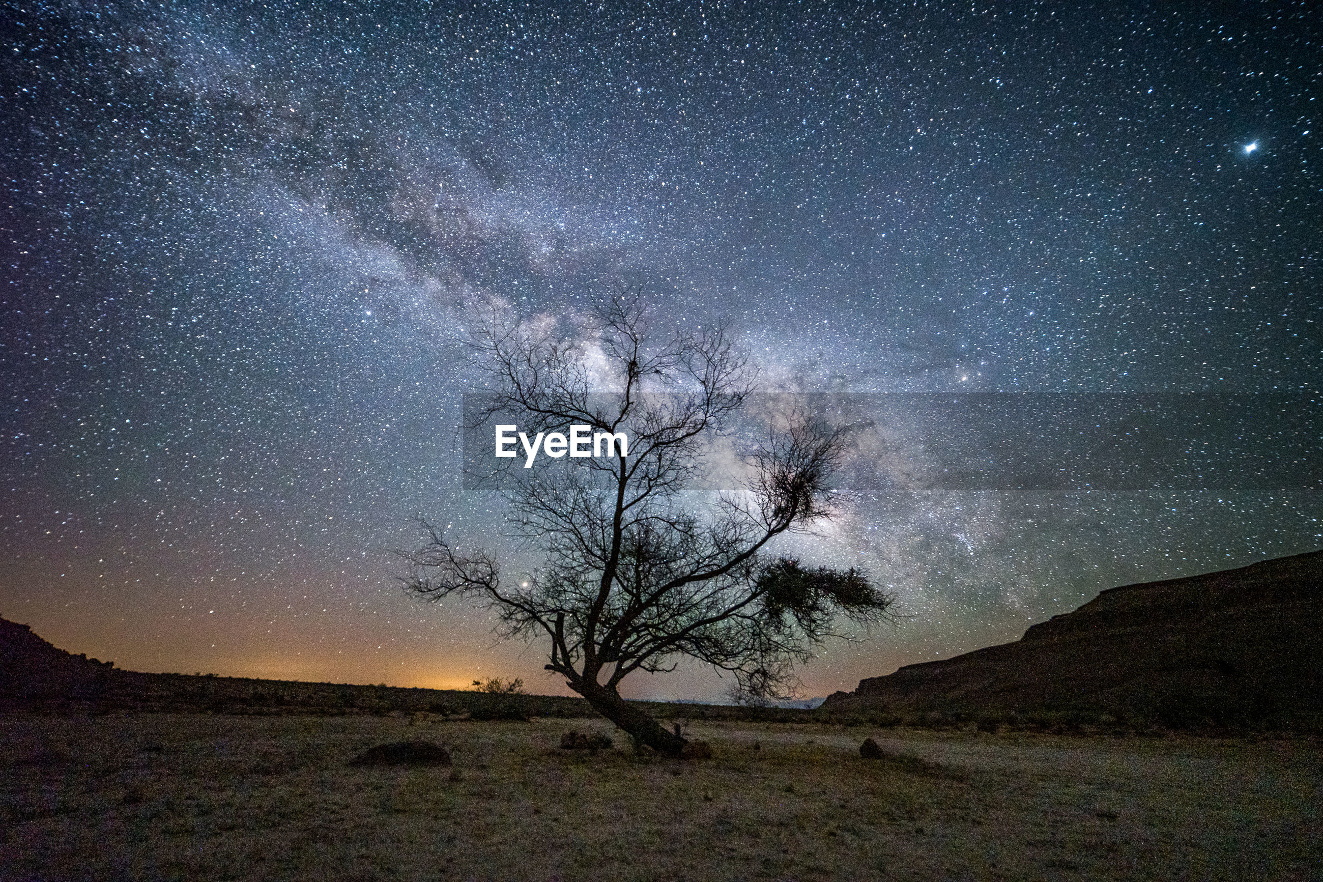 SCENIC VIEW OF TREE AGAINST SKY