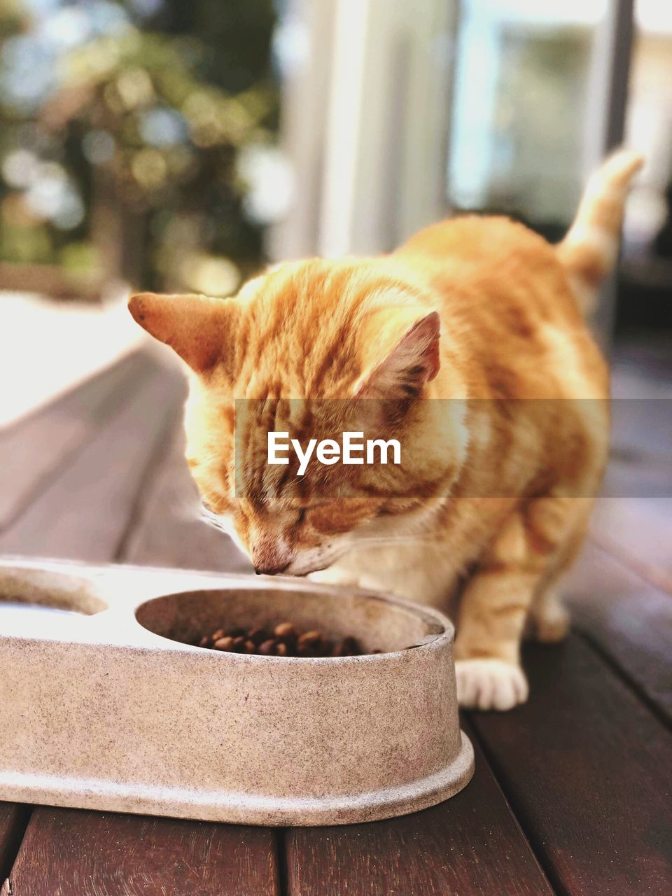 CLOSE-UP OF A CAT IN A PLATE