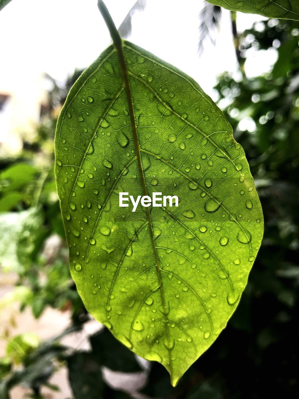 leaf, plant part, drop, green color, close-up, wet, nature, focus on foreground, plant, water, day, beauty in nature, growth, no people, outdoors, freshness, leaf vein, rain, dew, raindrop, purity, leaves