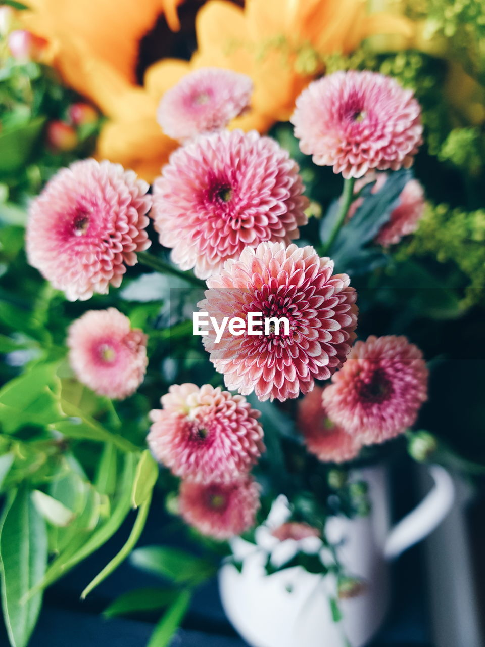 flower, plant, freshness, fragility, growth, nature, no people, leaf, beauty in nature, petal, close-up, flower head, day, outdoors