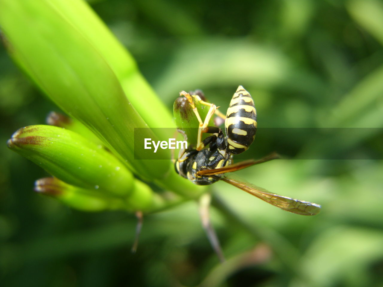 insect, animal themes, animals in the wild, one animal, green color, nature, animal wildlife, day, close-up, no people, outdoors, plant, growth, beauty in nature, bee