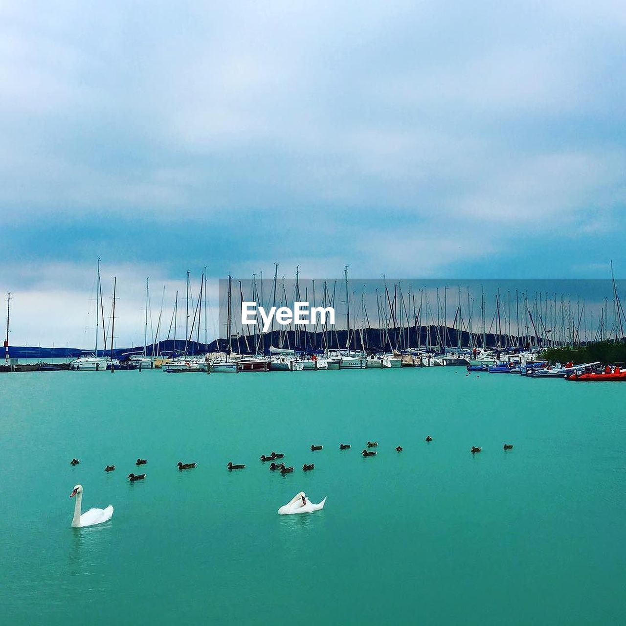 water, large group of animals, animal themes, nautical vessel, animals in the wild, sky, bird, sea, day, transportation, cloud - sky, no people, outdoors, moored, animal wildlife, nature, harbor, sailboat, flying, yacht, scenics, beauty in nature, sailing ship