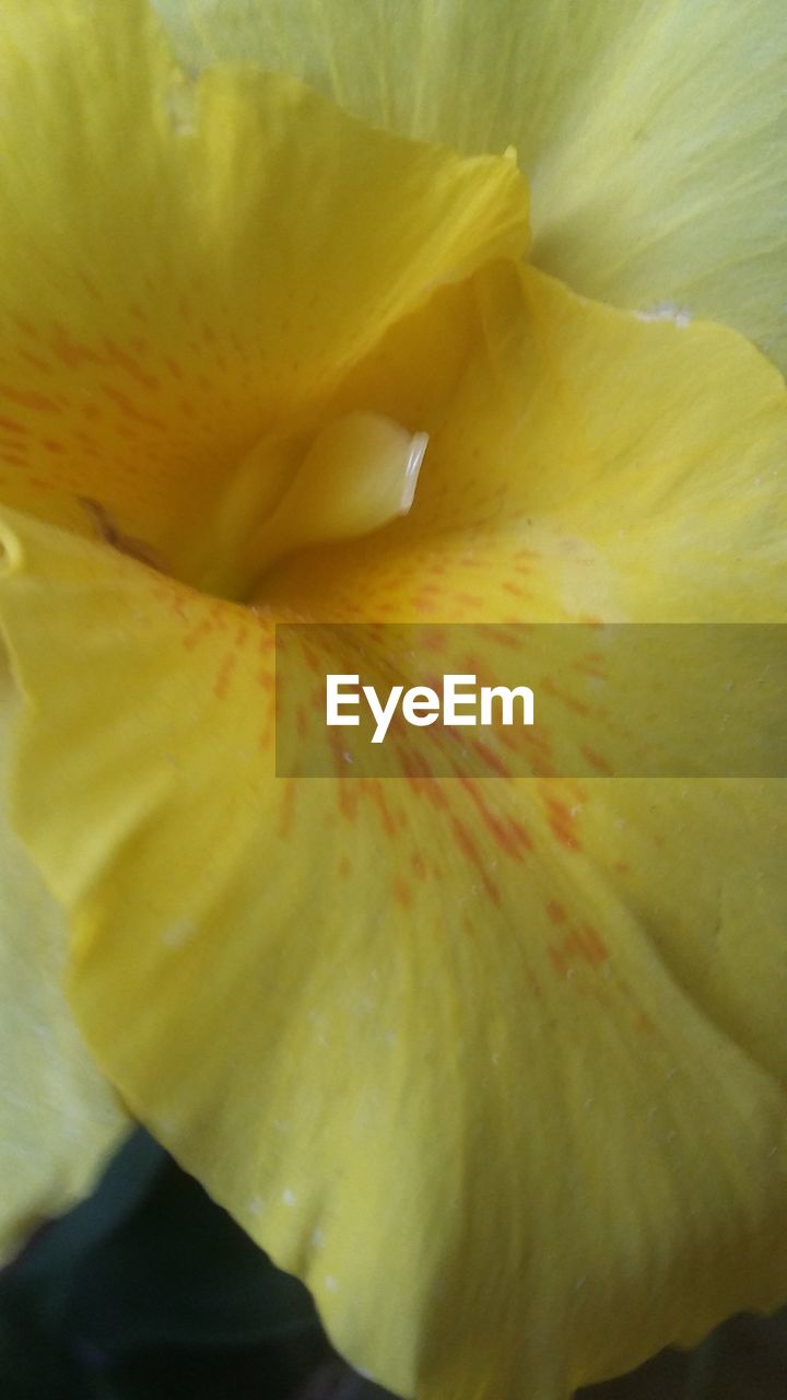 flower, petal, flower head, beauty in nature, freshness, fragility, nature, growth, yellow, backgrounds, design, full frame, close-up, soft focus, macro, selective focus, springtime, elegance, stamen, day lily, exoticism, no people, plant, outdoors, blooming, day