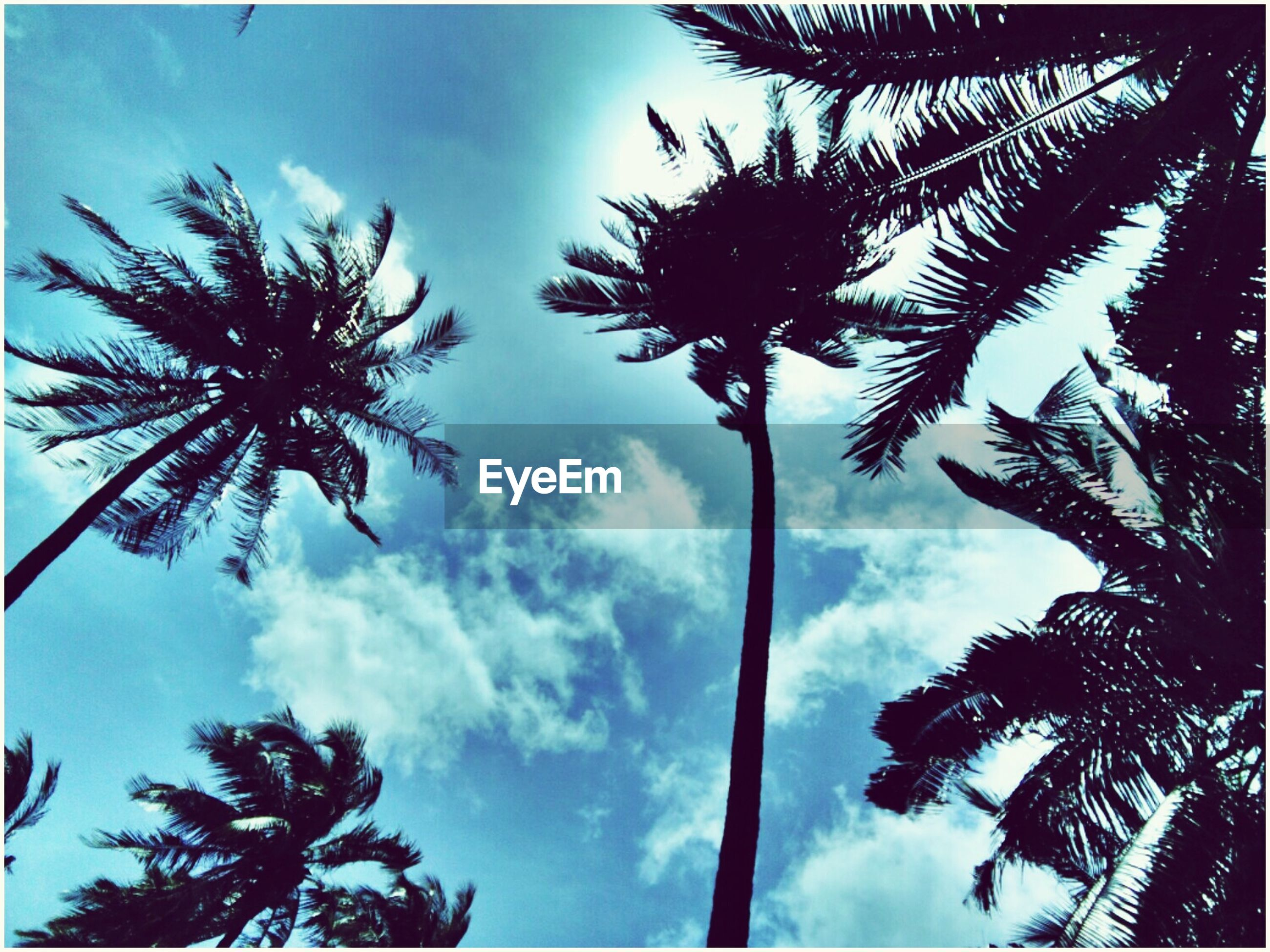 palm tree, low angle view, tree, tree trunk, tall - high, sky, growth, scenics, nature, tranquility, tranquil scene, beauty in nature, coconut palm tree, silhouette, cloud - sky, blue, outdoors, day, tropical climate, tall, branch, palm frond, treetop, outline, tropical tree, no people, palm leaf, non-urban scene, cloudy, majestic, solitude