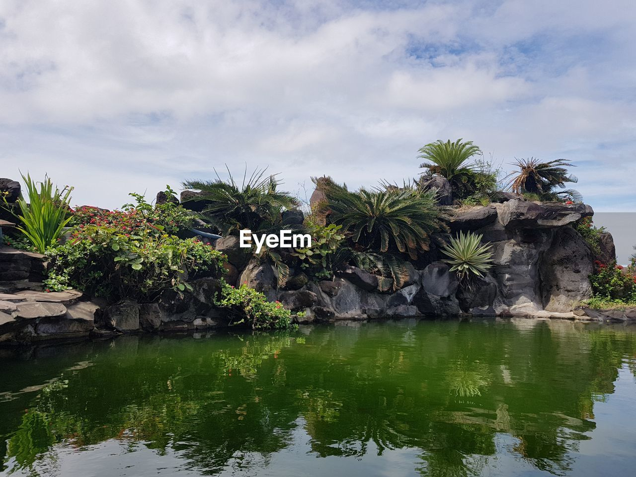 water, palm tree, tree, plant, sky, reflection, cloud - sky, tropical climate, beauty in nature, nature, waterfront, tranquility, scenics - nature, day, tranquil scene, growth, lake, no people, solid, outdoors, coconut palm tree