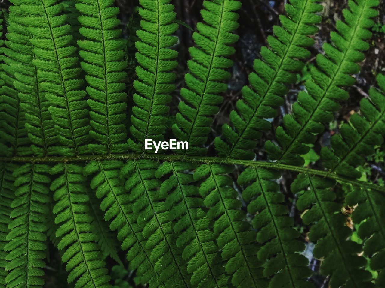 green color, growth, plant, close-up, full frame, no people, day, nature, beauty in nature, leaf, fern, natural pattern, plant part, pattern, backgrounds, selective focus, focus on foreground, outdoors, freshness, botany