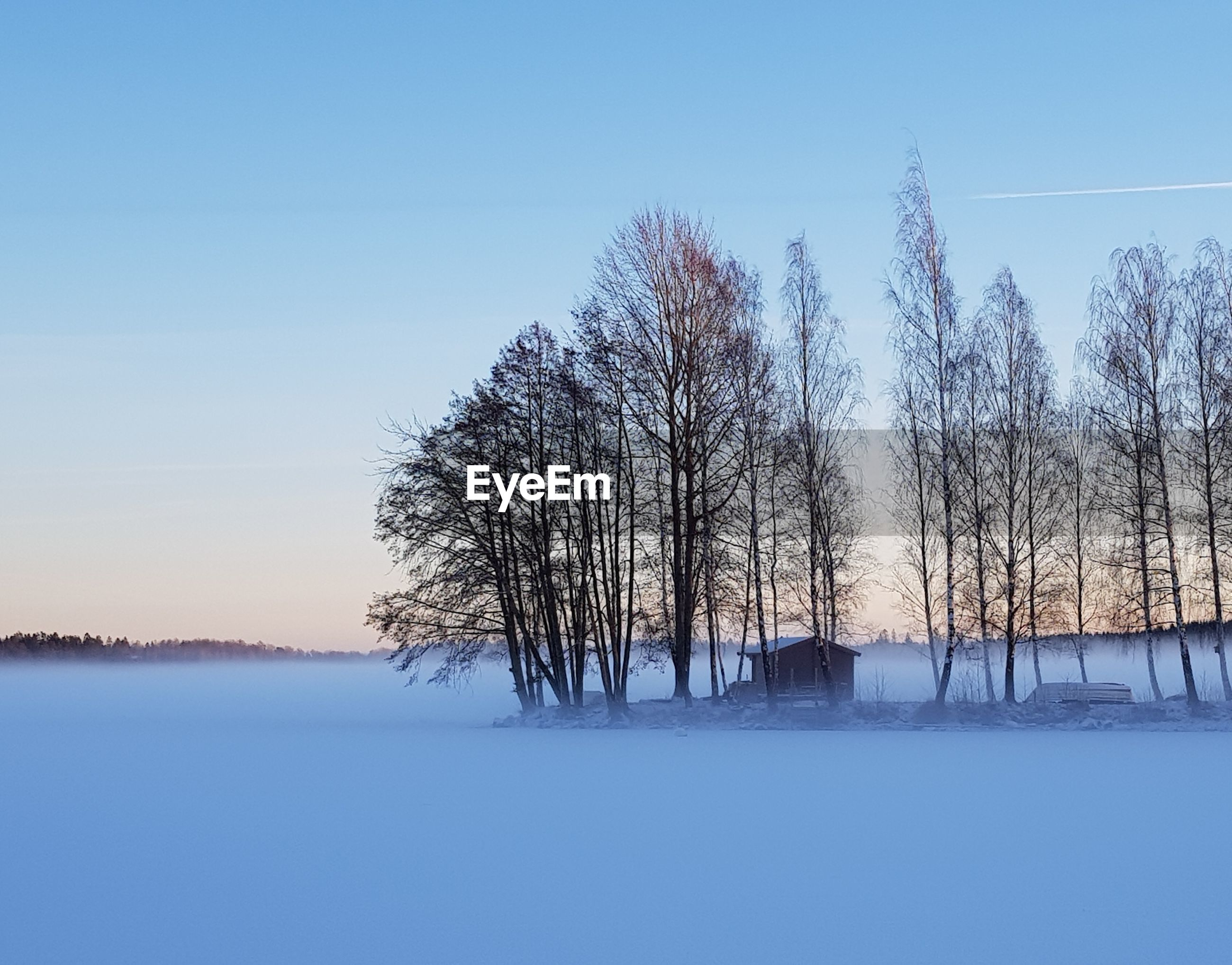 BARE TREES ON SNOWY LANDSCAPE AGAINST CLEAR BLUE SKY