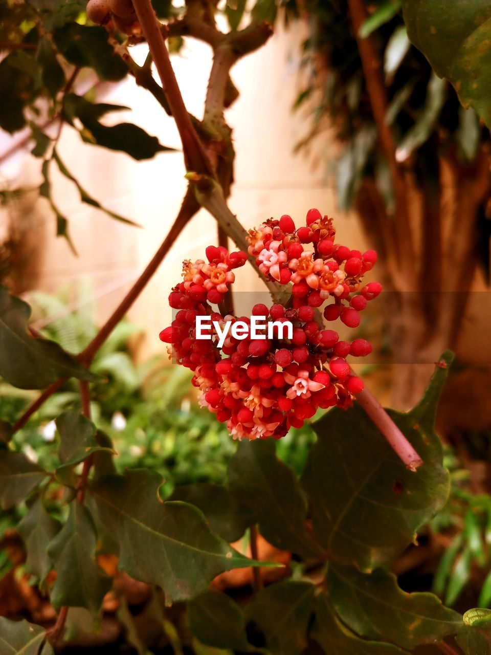 growth, beauty in nature, flower, nature, freshness, red, fragility, plant, petal, outdoors, day, no people, focus on foreground, close-up, leaf, blooming, flower head, tree