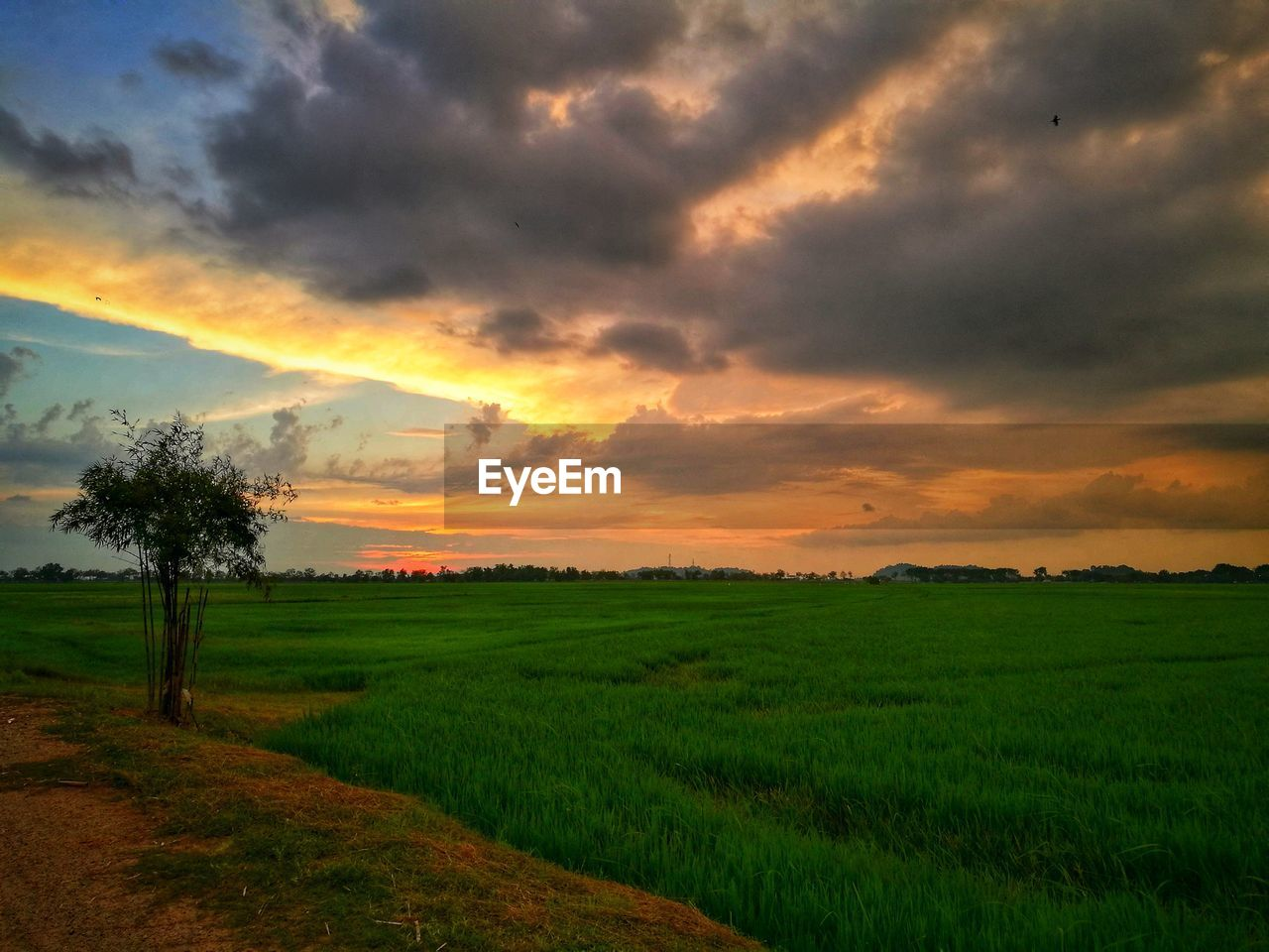 landscape, field, sunset, agriculture, nature, scenics, beauty in nature, farm, tranquil scene, tranquility, rural scene, cloud - sky, growth, sky, green color, no people, grass, rice paddy, outdoors, tree, day