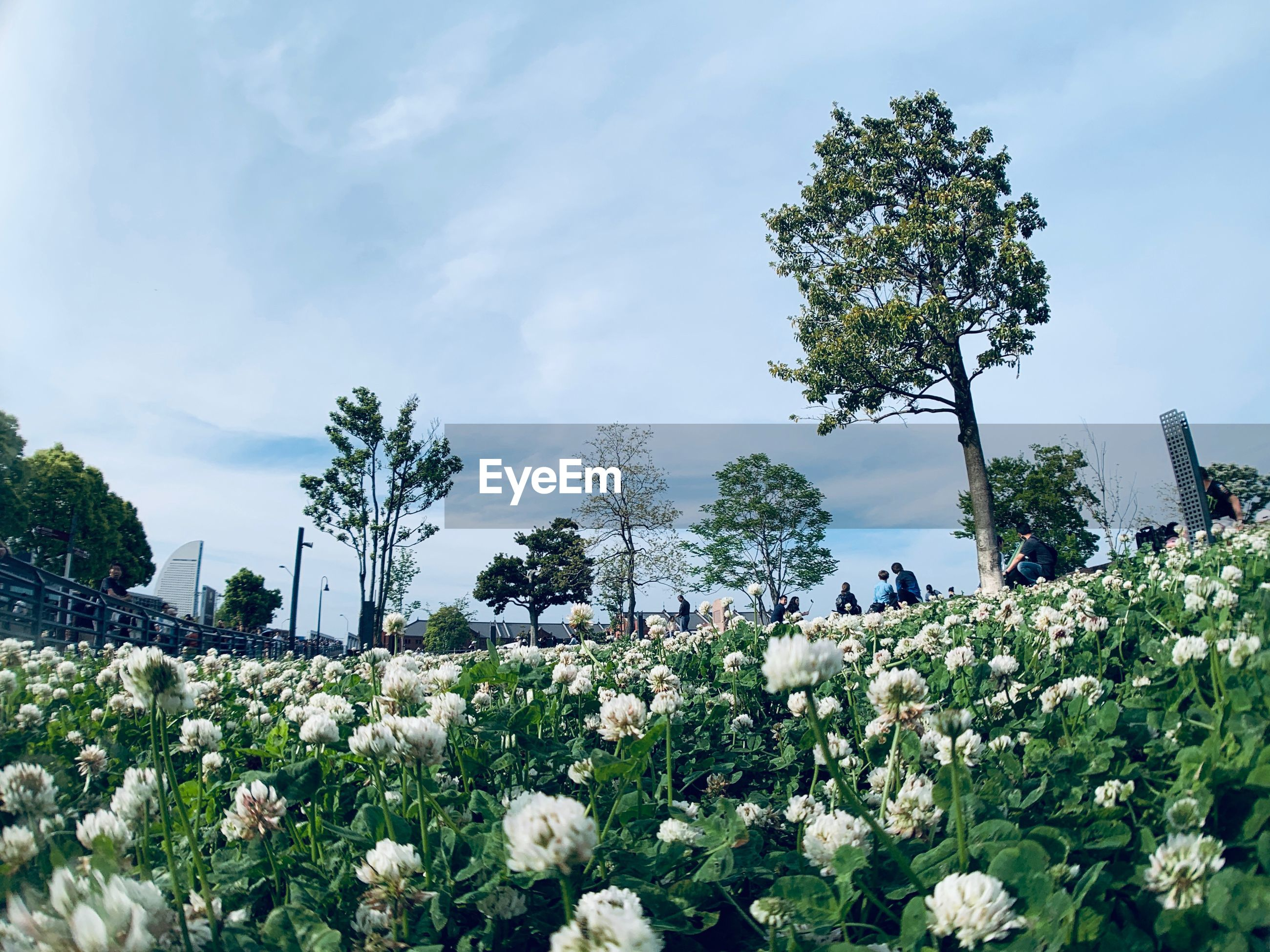 SCENIC VIEW OF FLOWERING PLANTS AND TREES AGAINST SKY
