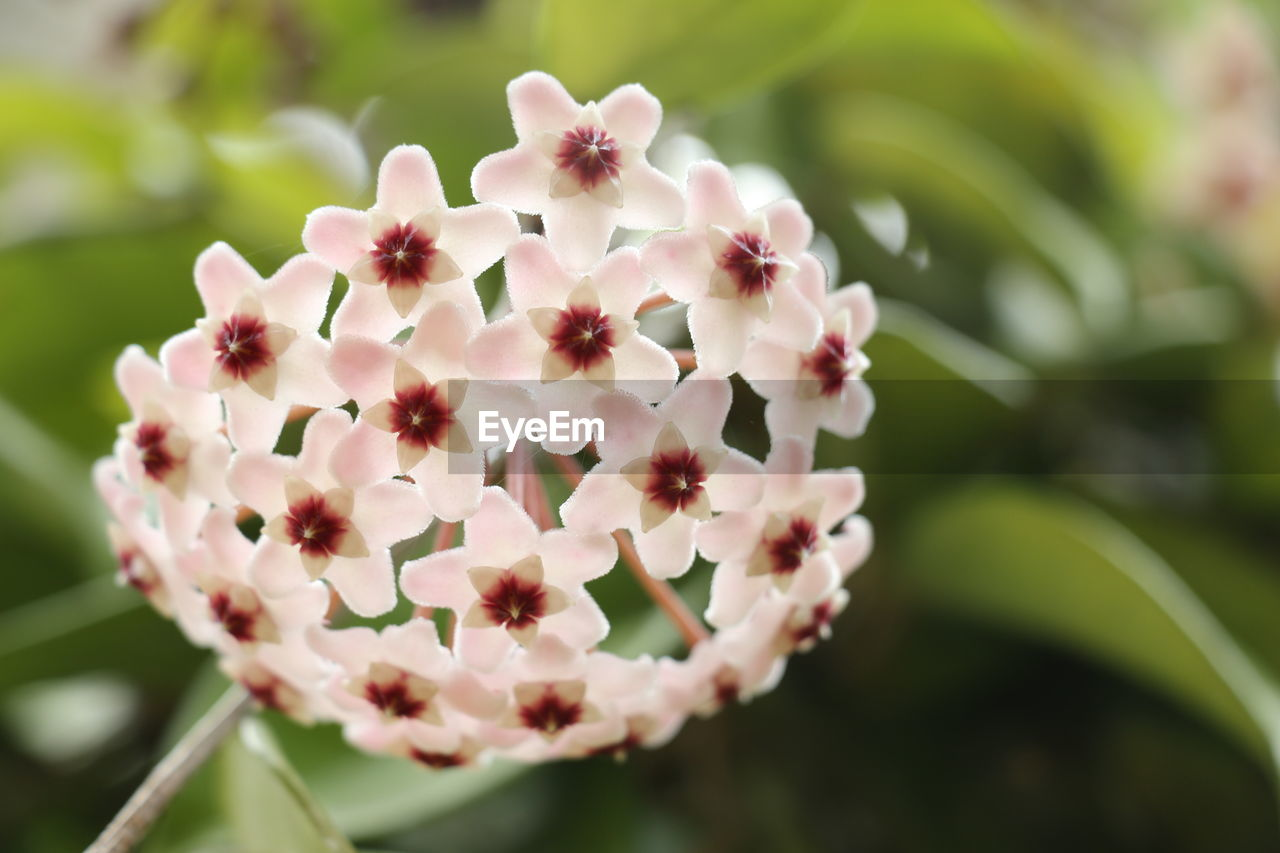 flower, nature, beauty in nature, petal, focus on foreground, fragility, day, freshness, pink color, outdoors, plant, close-up, growth, flower head, no people, blooming