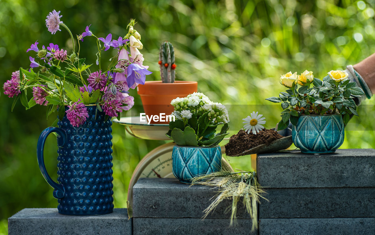 POTTED PLANTS IN BACKYARD