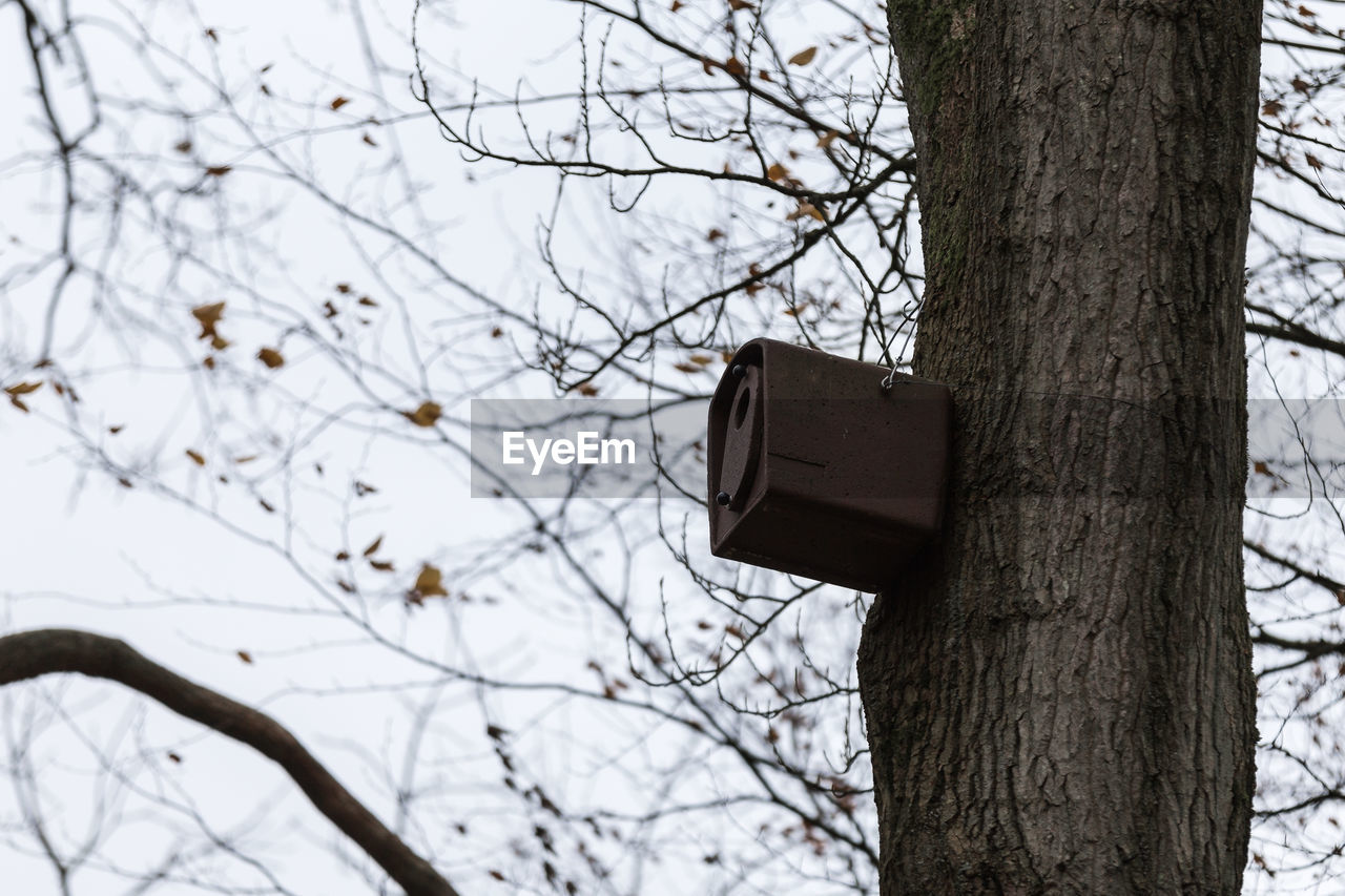 tree, tree trunk, trunk, focus on foreground, plant, branch, technology, birdhouse, nature, no people, bare tree, outdoors, day, low angle view, electricity, connection, close-up, cable, wood - material, communication, power supply, electrical equipment