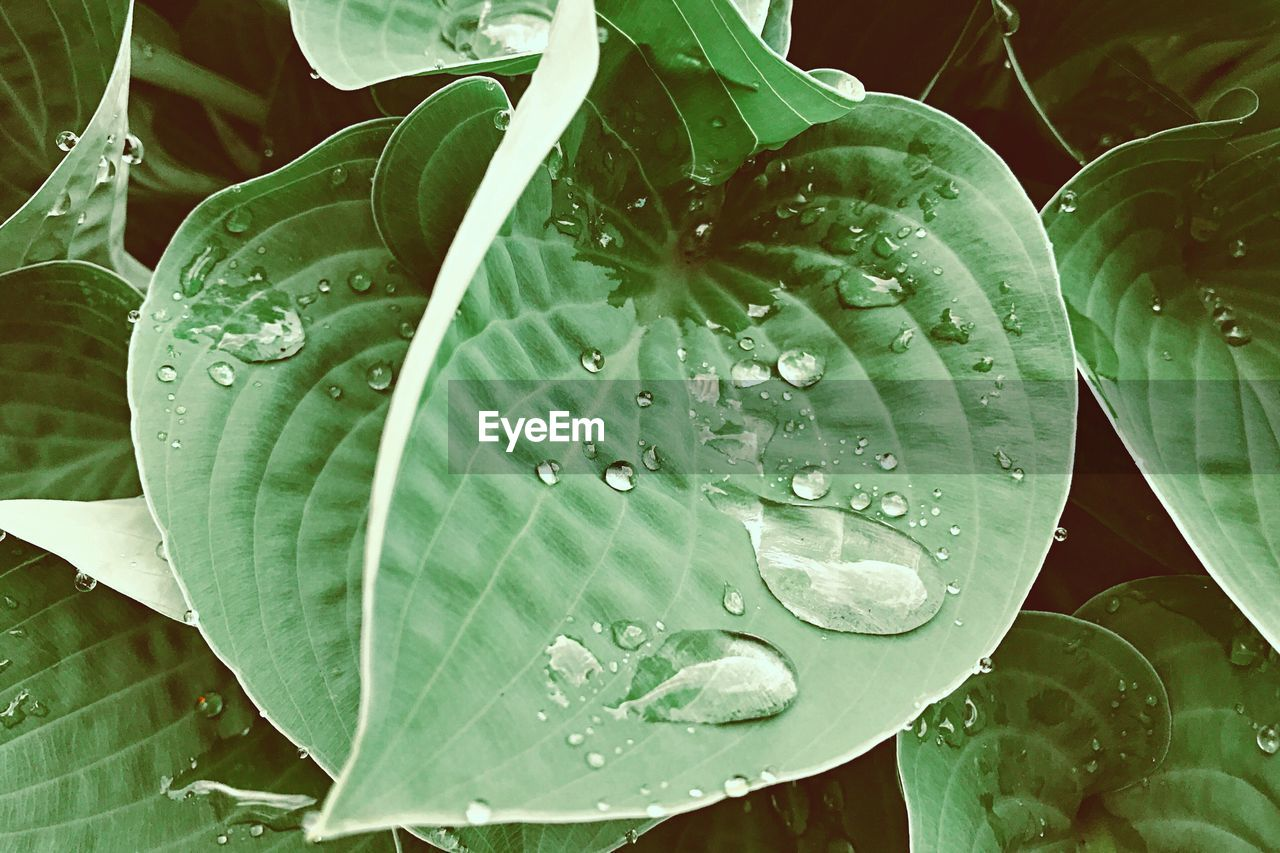 drop, wet, leaf, plant part, water, close-up, growth, plant, beauty in nature, green color, freshness, nature, no people, vulnerability, rain, fragility, dew, raindrop, purity, outdoors, leaves, rainy season, flower, flower head