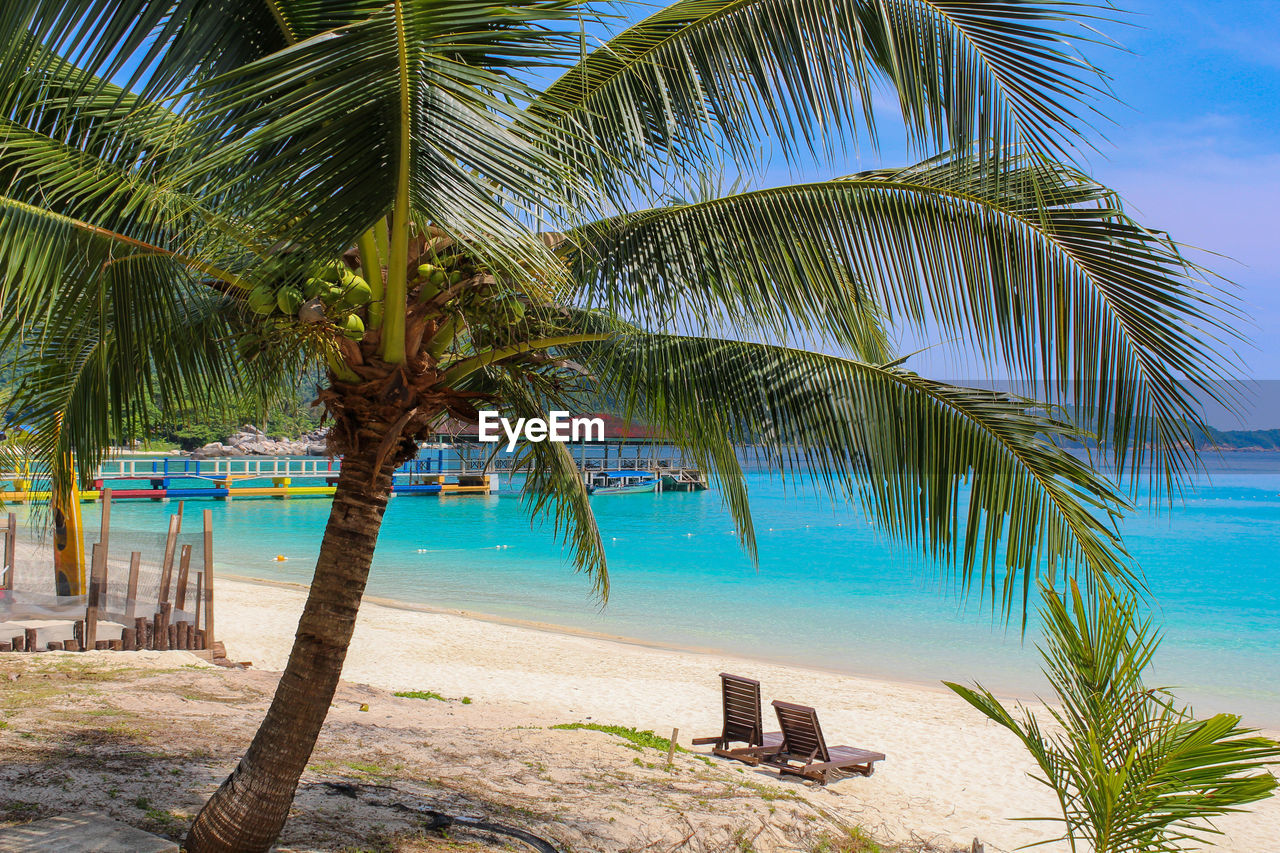 tropical climate, palm tree, water, tree, beach, plant, sea, tranquility, nature, land, beauty in nature, tranquil scene, sky, no people, scenics - nature, trunk, tree trunk, sand, day, outdoors, palm leaf, horizon over water, coconut palm tree, swimming pool, tropical tree, turquoise colored