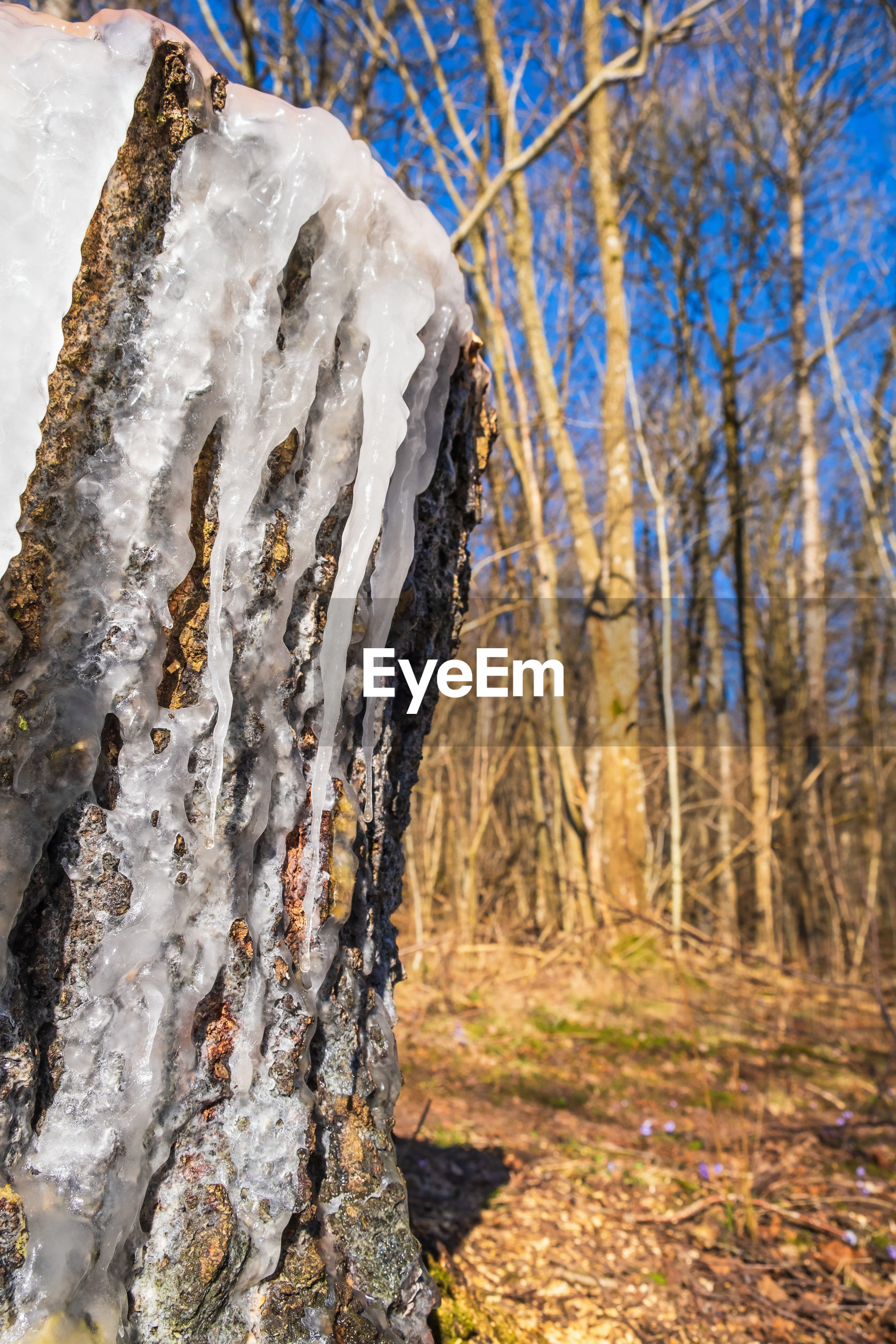 CLOSE-UP OF TREE TRUNK DURING WINTER