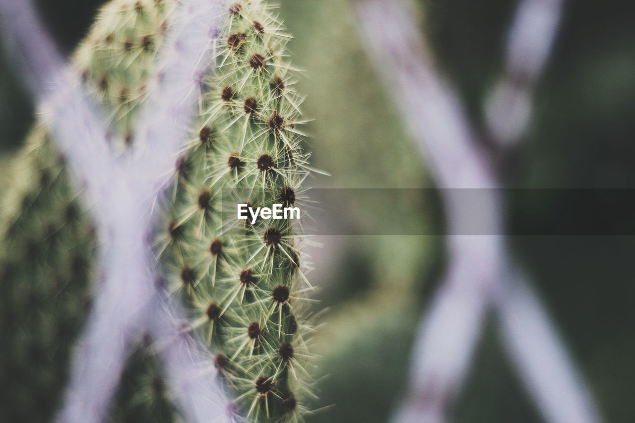 plant, growth, succulent plant, close-up, cactus, nature, thorn, beauty in nature, day, selective focus, fragility, no people, vulnerability, focus on foreground, green color, sharp, spiked, natural pattern, outdoors, warning sign, softness