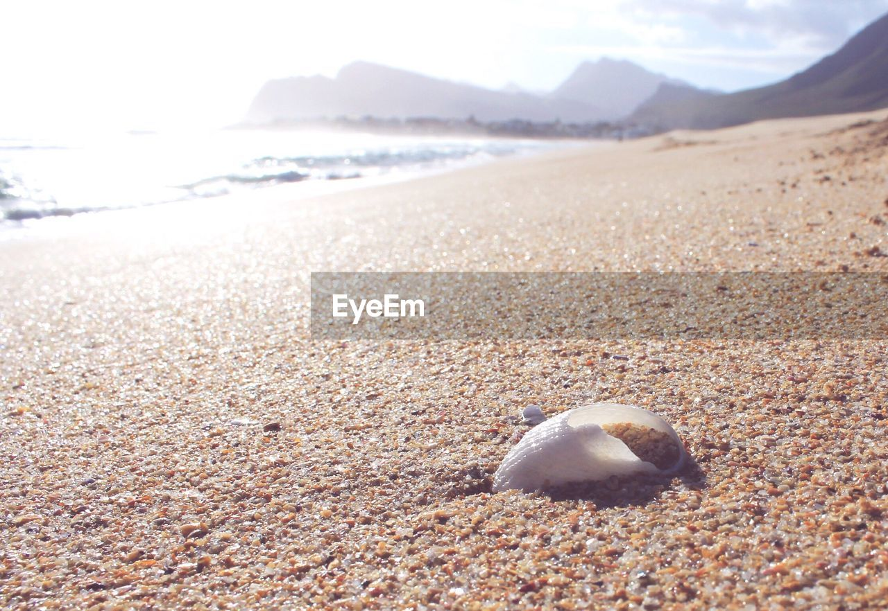 sand, beach, shore, nature, day, outdoors, sea, no people, scenics, water, one animal, animal themes, beauty in nature, close-up, sea life, sky