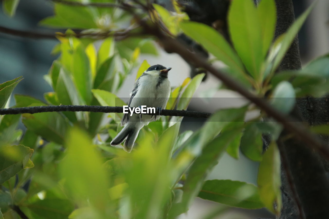 animal themes, animal, vertebrate, animal wildlife, bird, one animal, animals in the wild, perching, plant, selective focus, plant part, leaf, green color, tree, day, no people, nature, growth, branch, outdoors, small