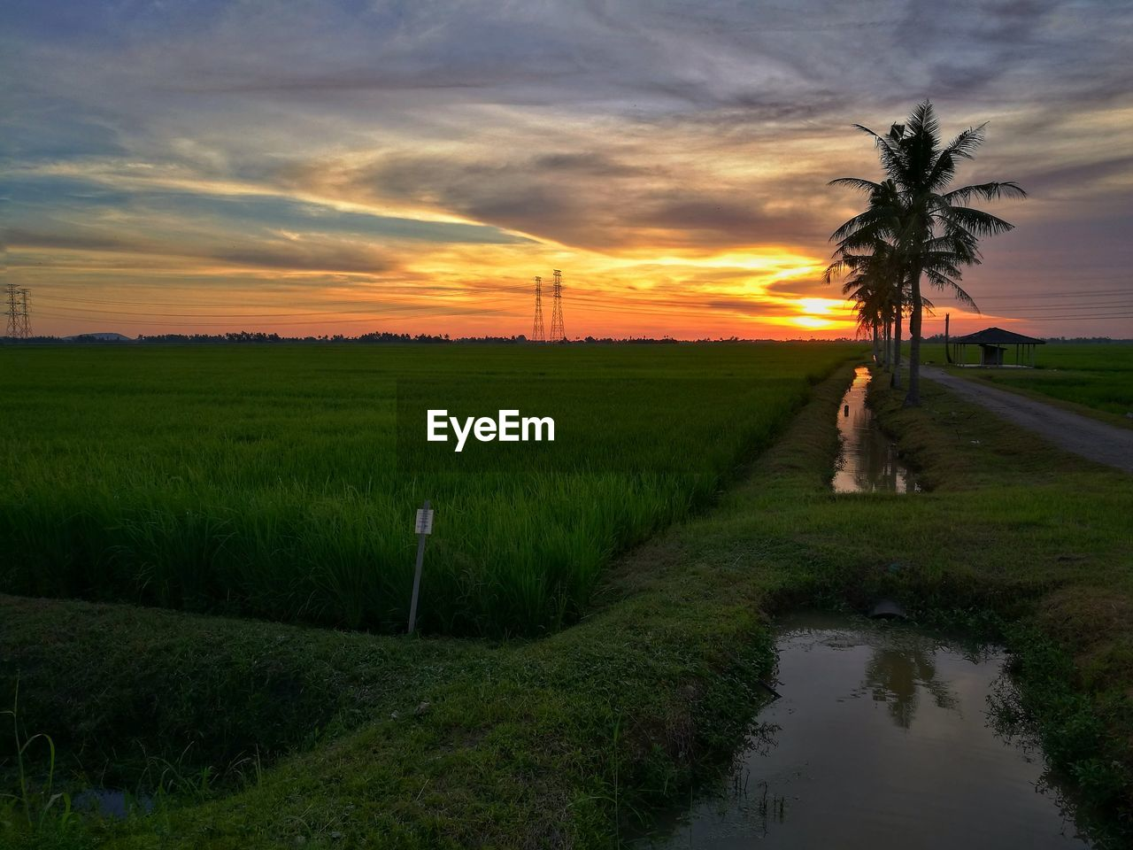 sunset, nature, grass, tranquil scene, cloud - sky, scenics, beauty in nature, sky, tree, tranquility, outdoors, no people, water, day