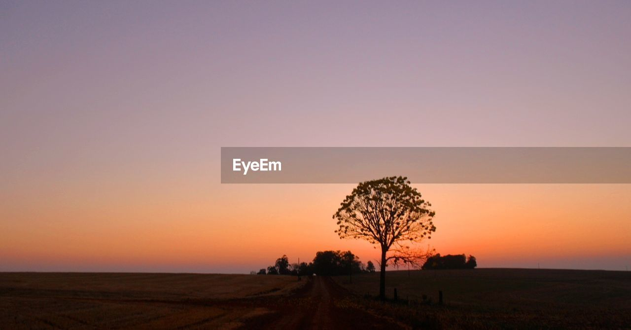 sunset, orange color, landscape, nature, beauty in nature, silhouette, field, tranquil scene, scenics, tranquility, tree, sky, no people, outdoors, clear sky, grass, day