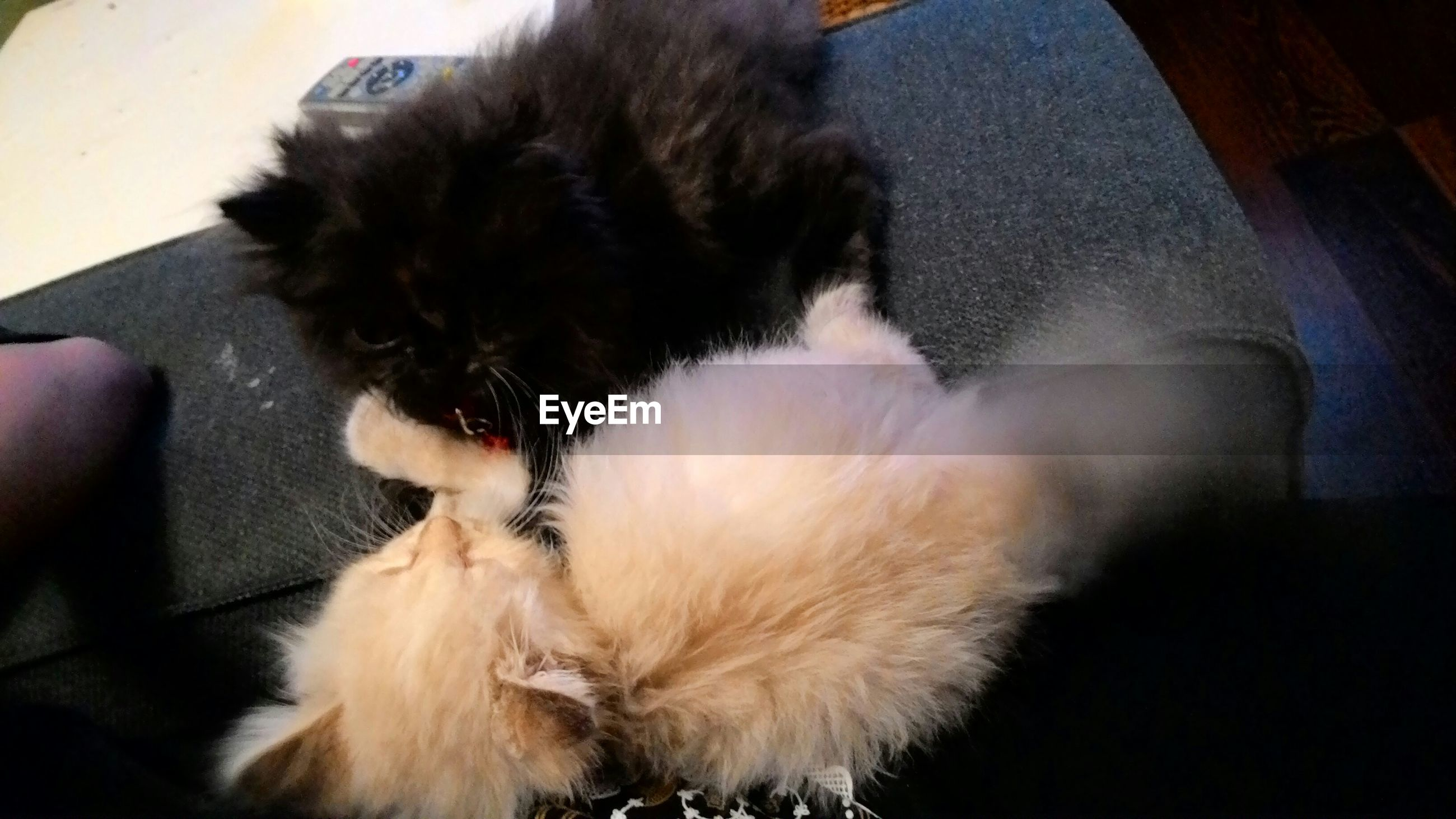 domestic animals, pets, animal themes, one animal, mammal, domestic cat, indoors, cat, dog, feline, relaxation, high angle view, whisker, sleeping, part of, close-up, resting, lying down, pet owner, home interior