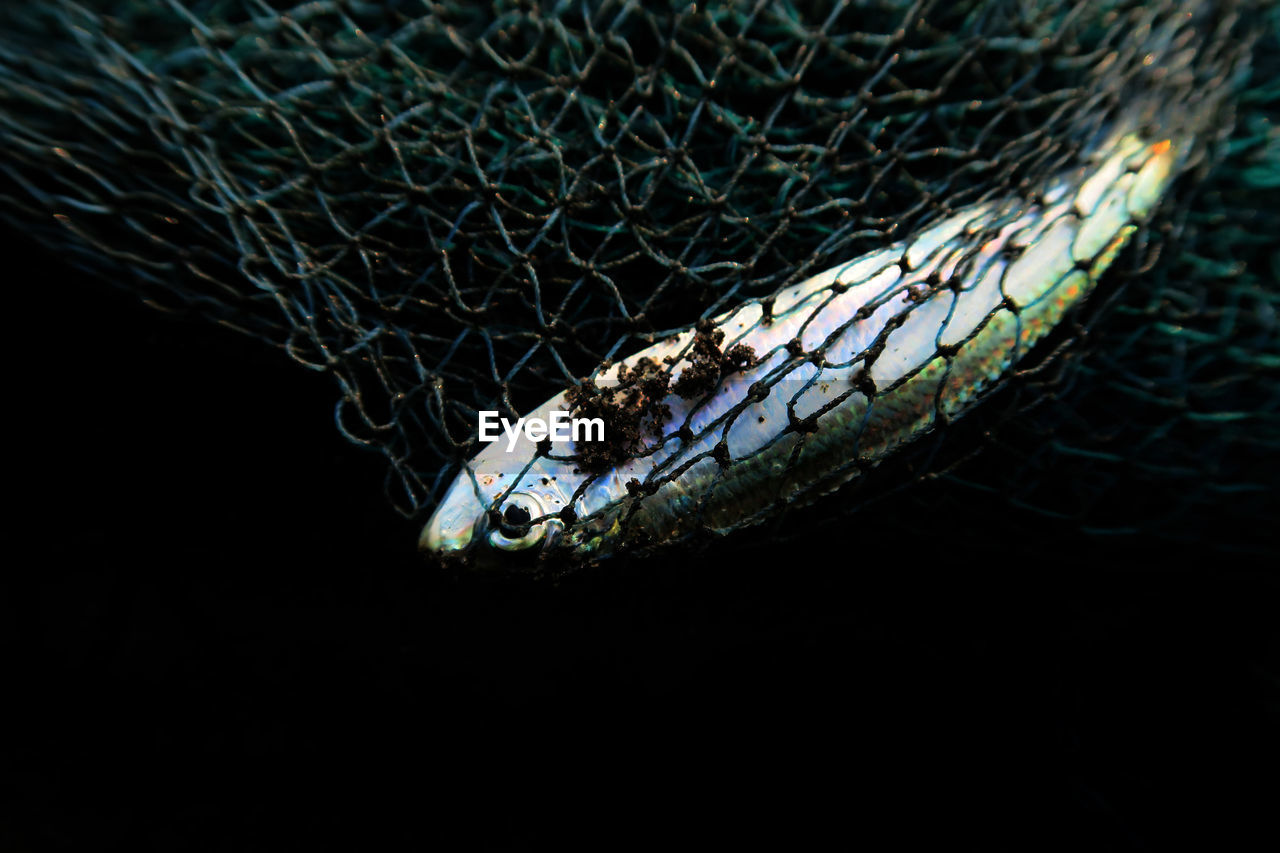 Close-Up Of Fish In Net Against Black Background