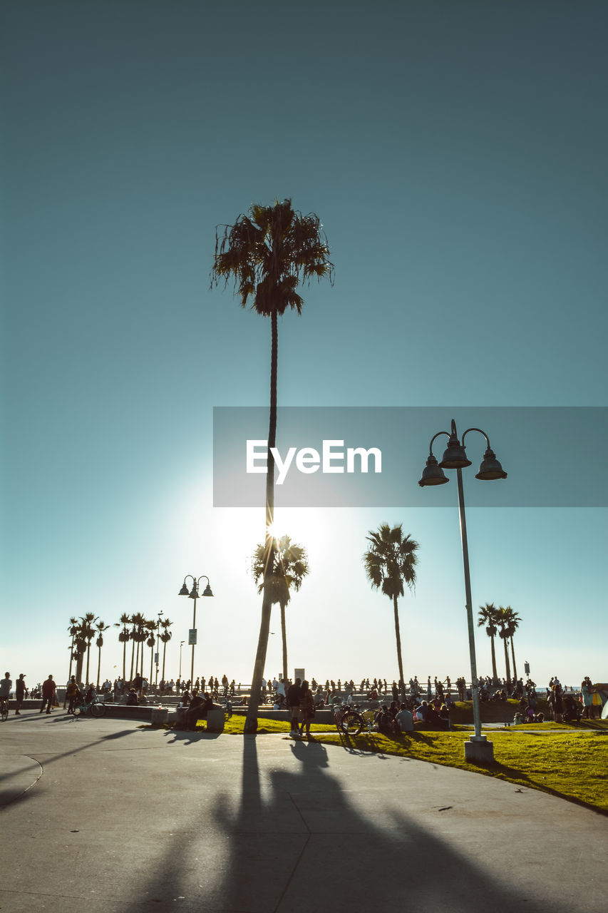 sky, palm tree, street, street light, tropical climate, plant, tree, nature, clear sky, transportation, road, lighting equipment, city, group of people, footpath, lifestyles, the way forward, incidental people, direction, outdoors, treelined