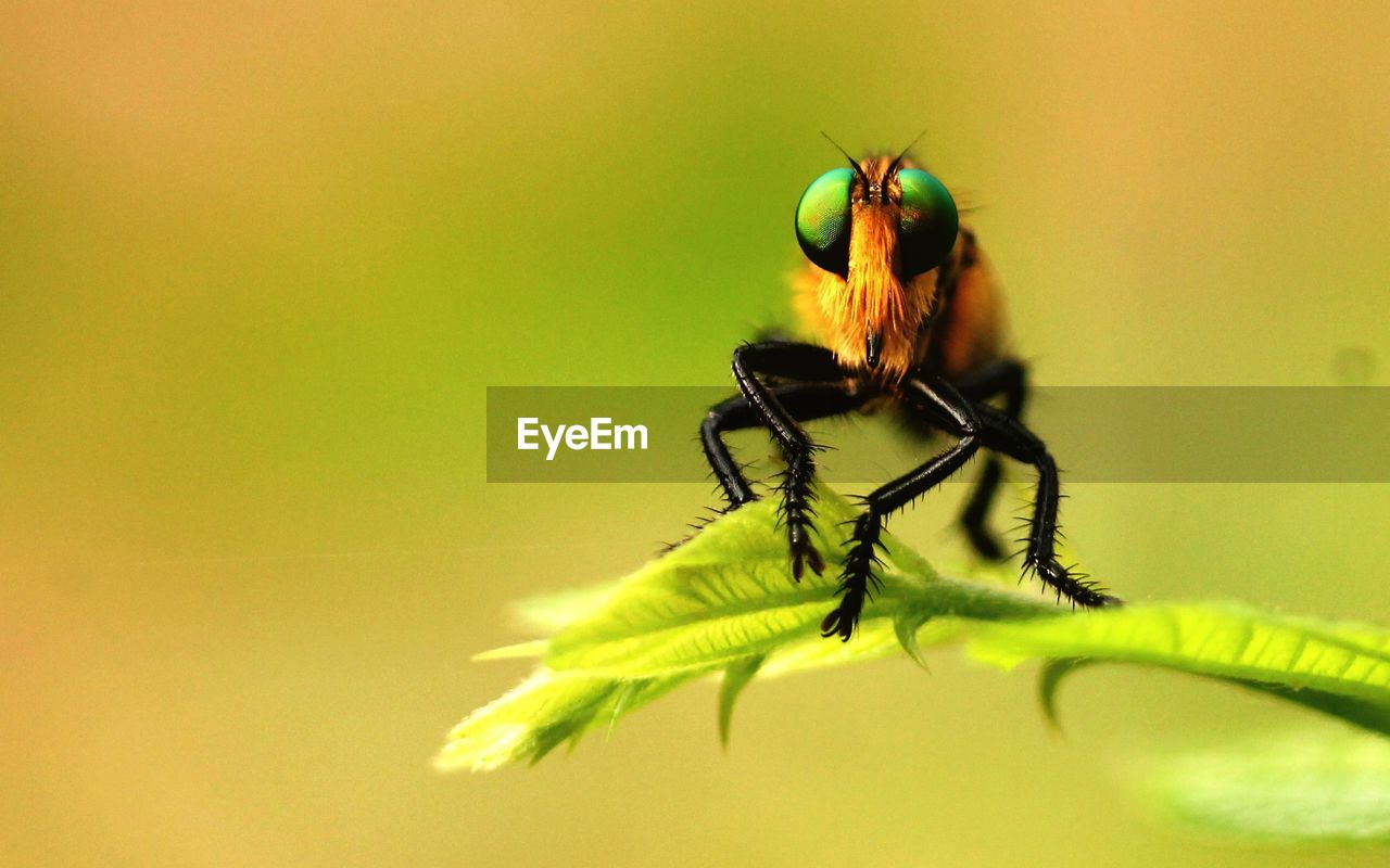 invertebrate, insect, animal themes, animal, animal wildlife, one animal, animals in the wild, close-up, plant, no people, selective focus, nature, leaf, green color, plant part, day, beauty in nature, growth, animal body part, outdoors, animal eye