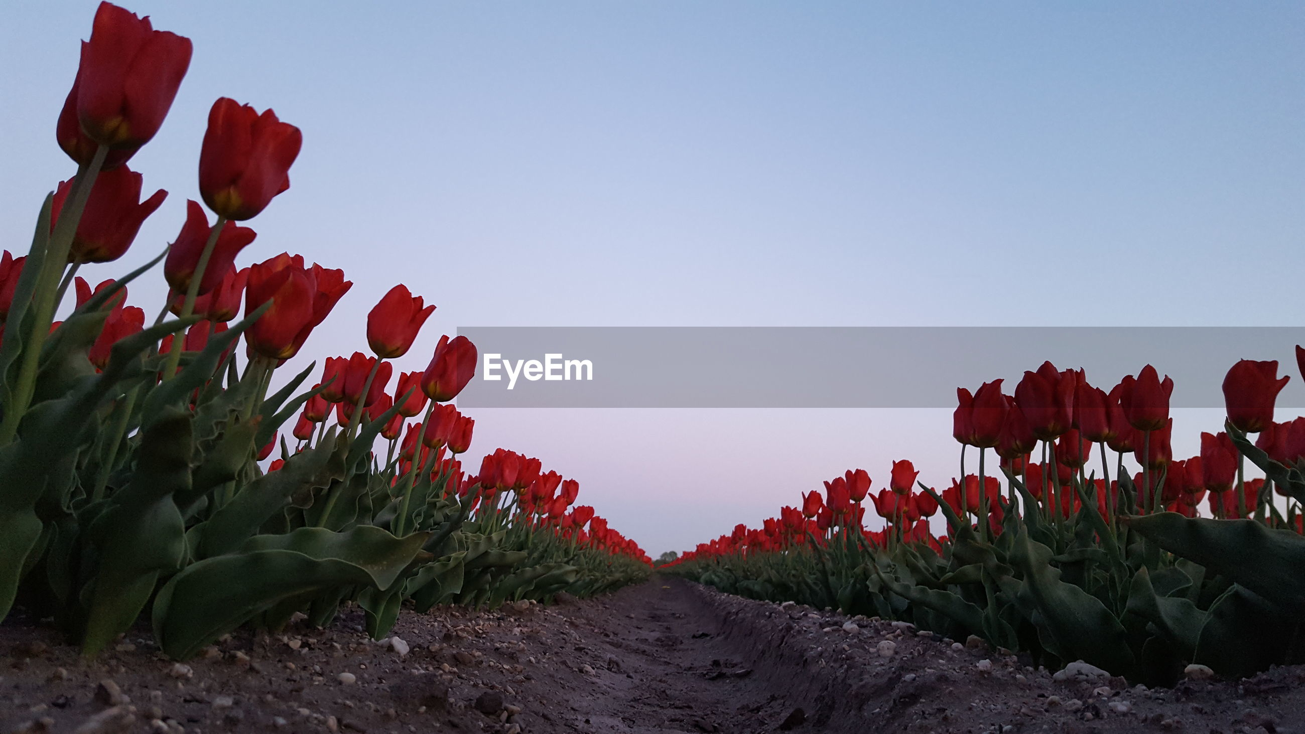 RED FLOWERING PLANTS ON LAND AGAINST SKY