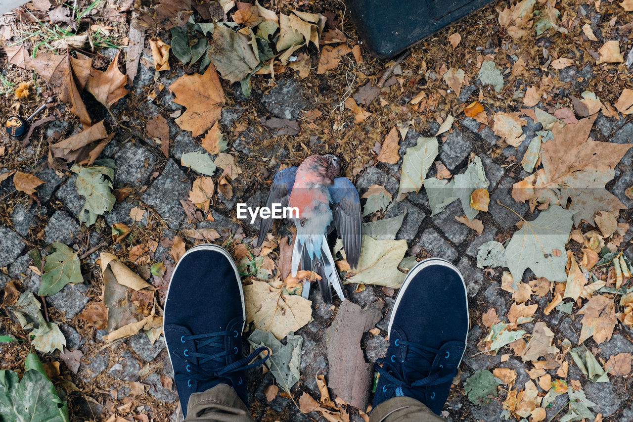 Low section of person standing by dead bird