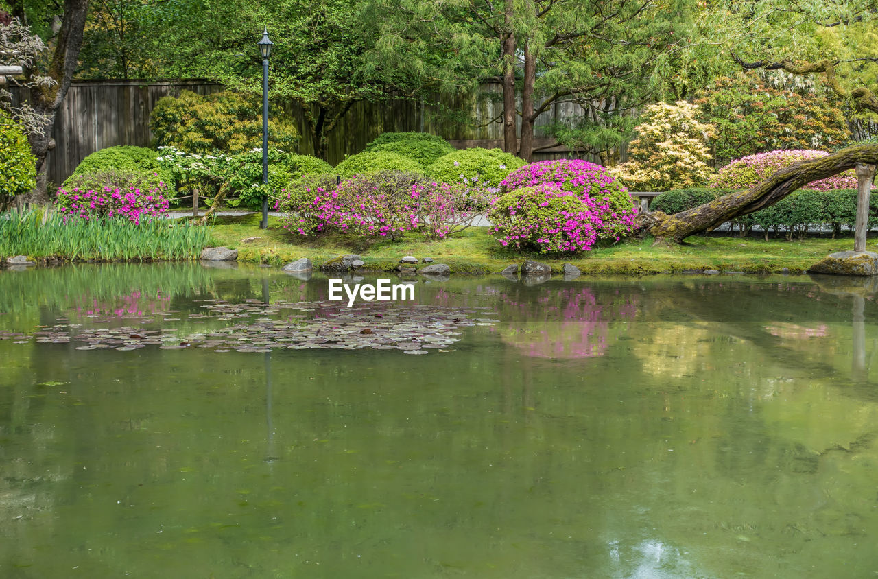 reflection, flower, pond, water, nature, growth, beauty in nature, tree, outdoors, tranquility, day, waterfront, water lily, no people, tranquil scene, green color, plant, scenics, fragility