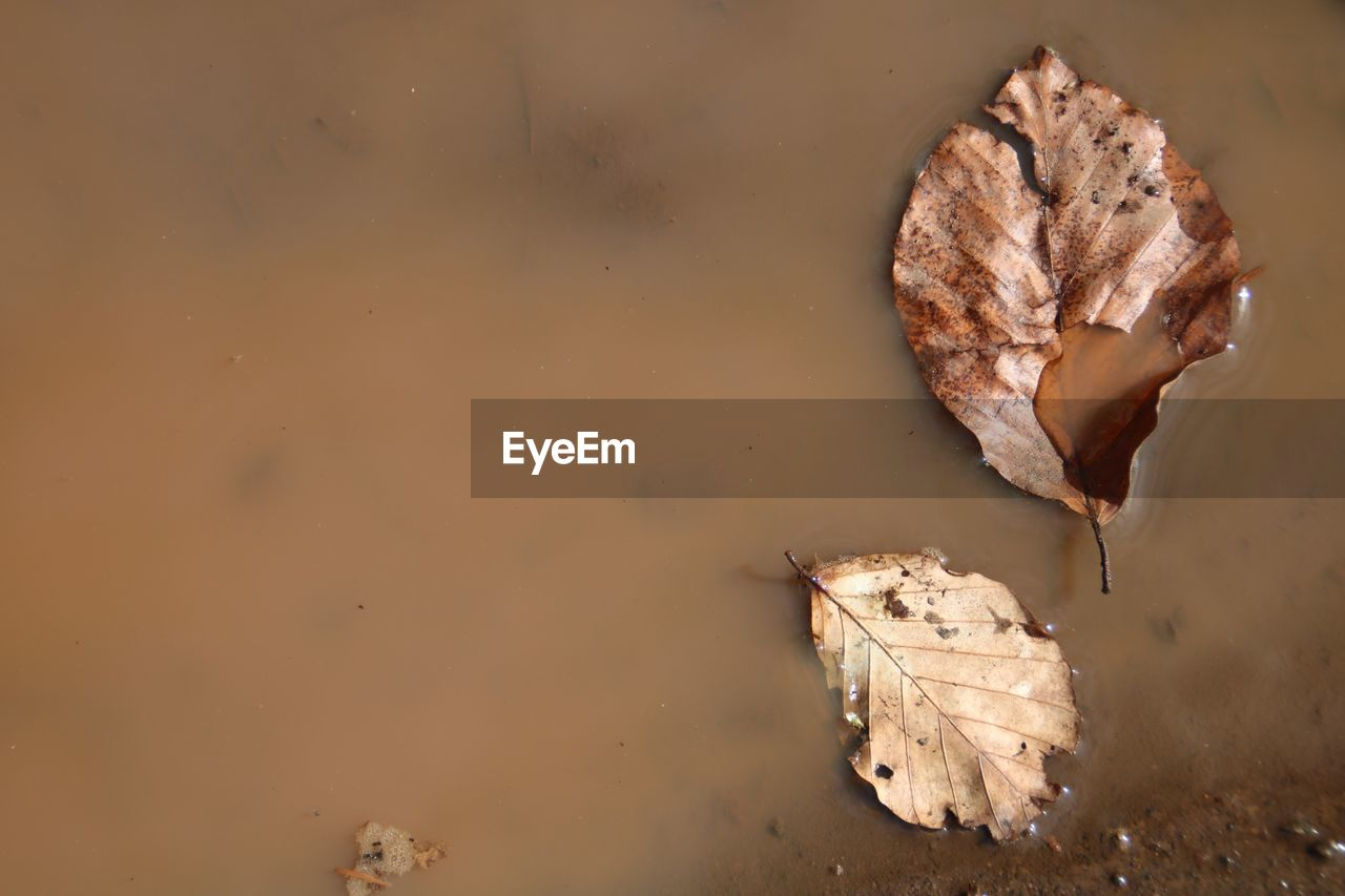leaf, plant part, autumn, dry, no people, close-up, high angle view, nature, vulnerability, fragility, brown, change, leaves, outdoors, beauty in nature, food, food and drink, plant, day, dried
