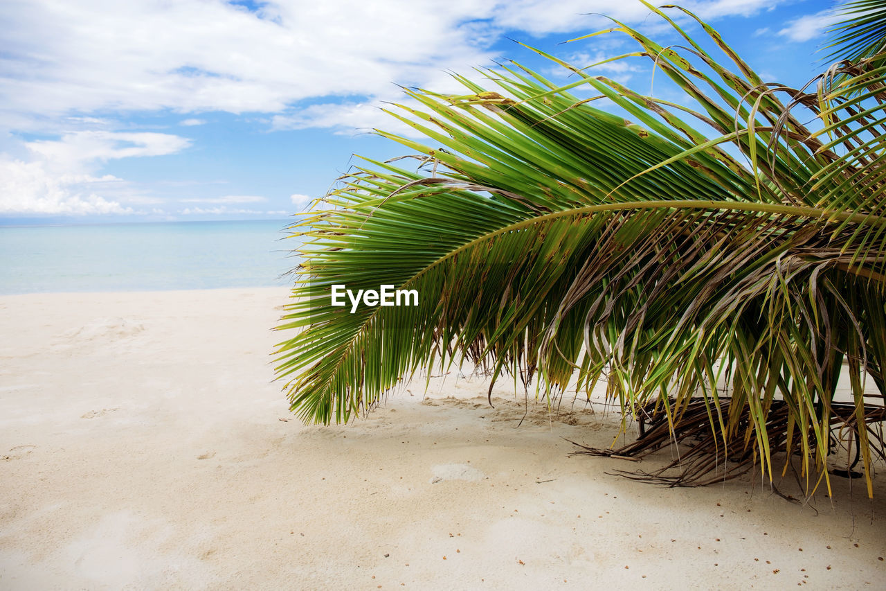sky, beach, land, cloud - sky, sea, beauty in nature, tranquility, palm tree, plant, nature, water, sand, tropical climate, growth, green color, horizon over water, scenics - nature, palm leaf, tranquil scene, horizon, no people, outdoors, coconut palm tree