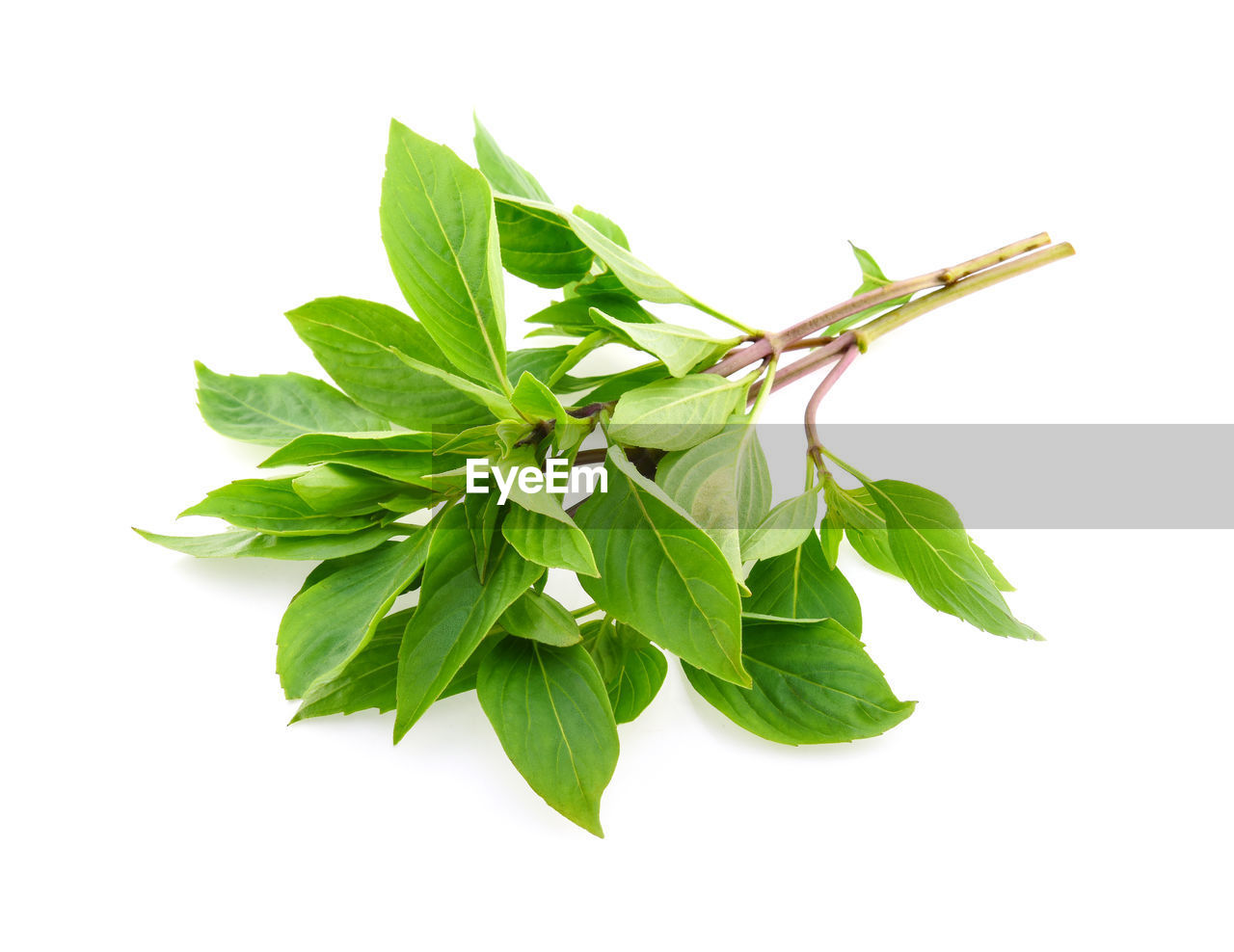 white background, studio shot, leaf, plant part, green color, indoors, close-up, food and drink, herb, food, cut out, no people, nature, wellbeing, still life, healthy eating, plant, freshness, leaves, basil, mint leaf - culinary