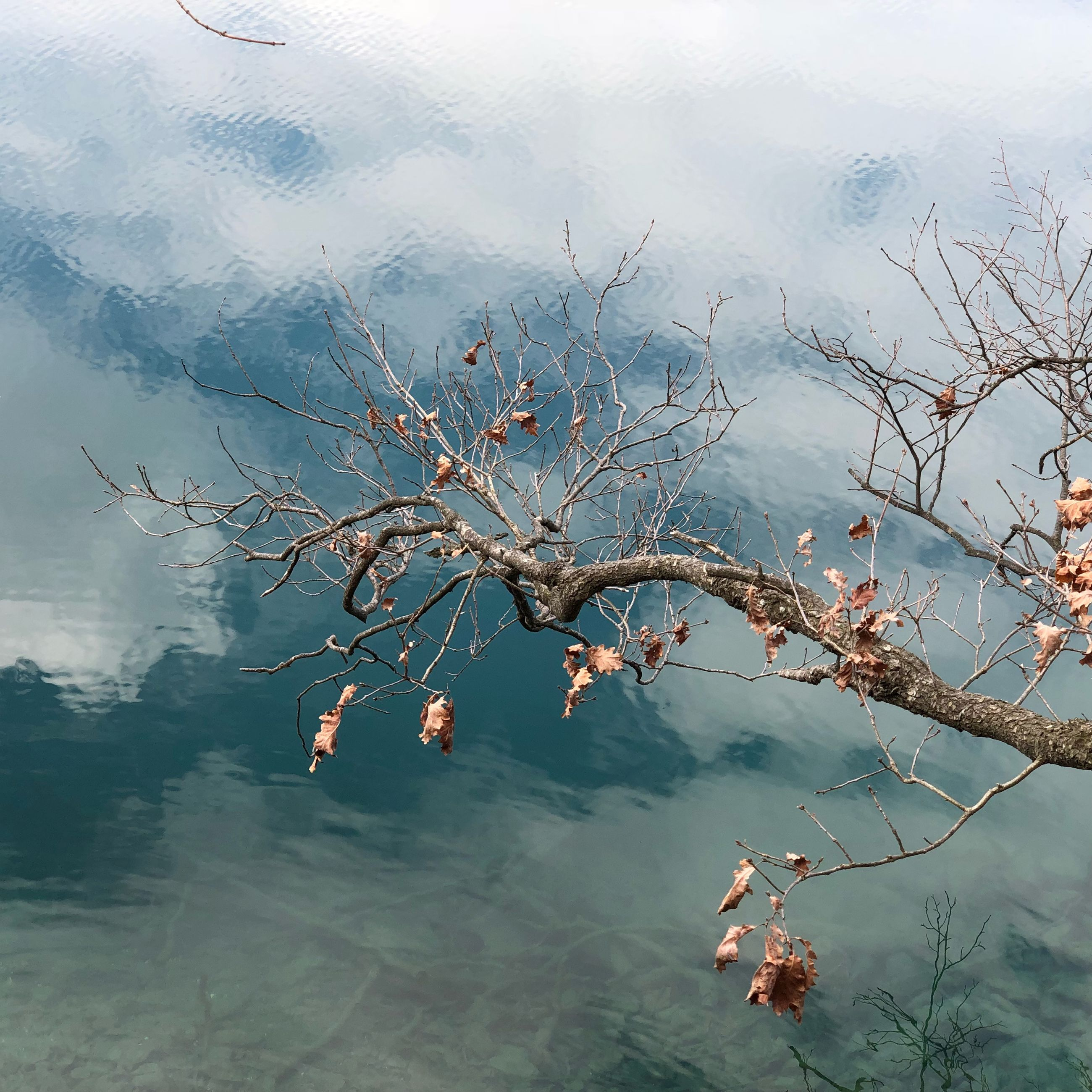 Bare tree over lake