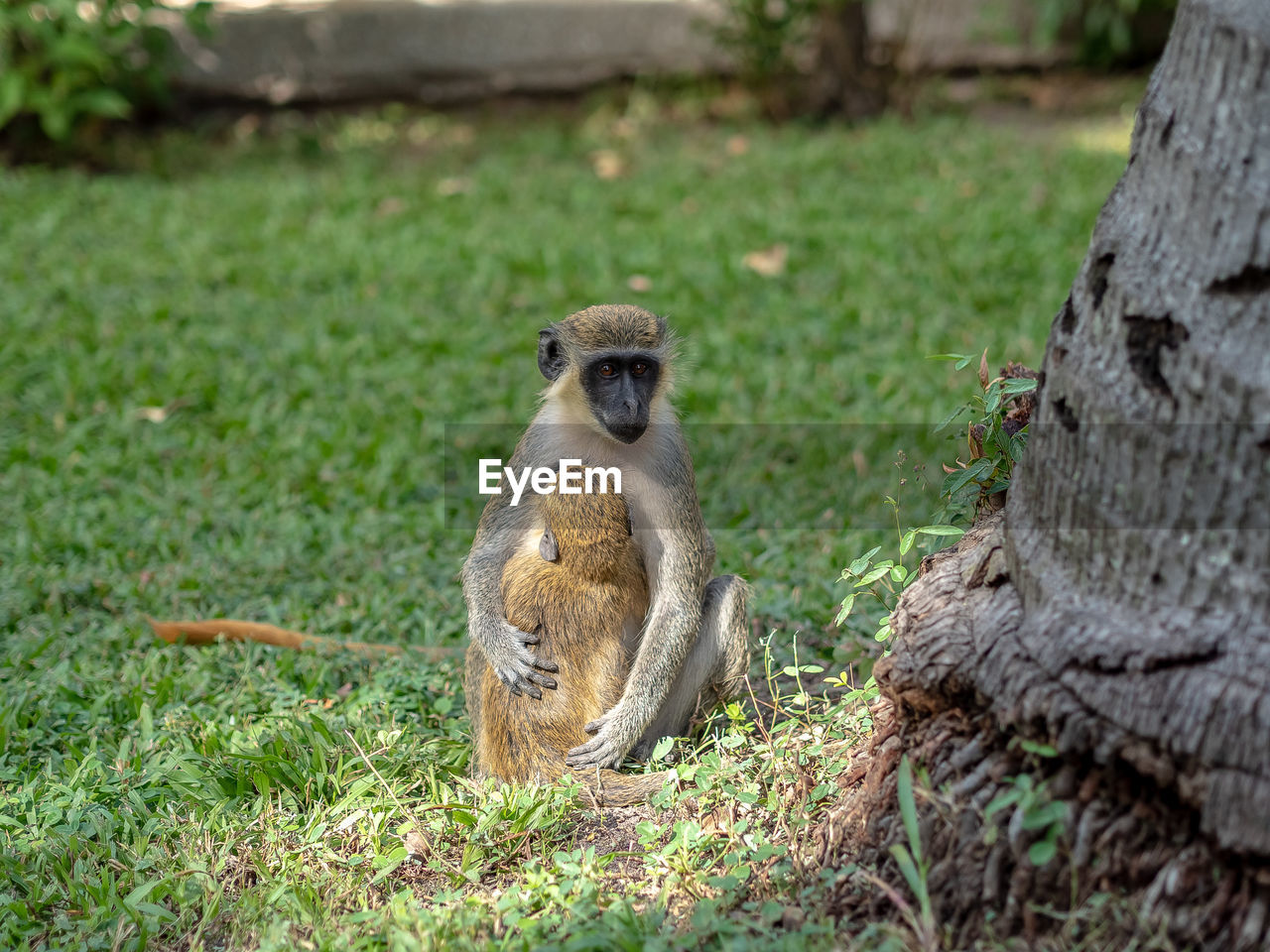 animal wildlife, animals in the wild, mammal, vertebrate, plant, one animal, primate, day, no people, nature, tree, land, focus on foreground, sitting, field, outdoors, animal family, care