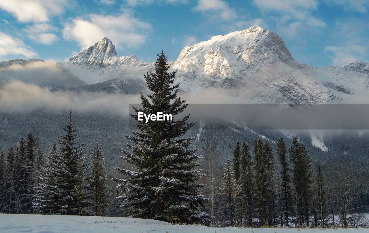Trees against snowcapped mountains during winter