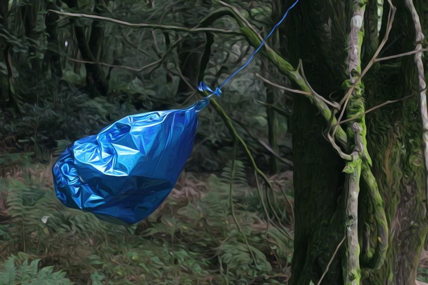 Blue Balloon Forest Green Color Vibrant Color Nature Blue Blue Color Nature Wilderness Lancashire This Morning.