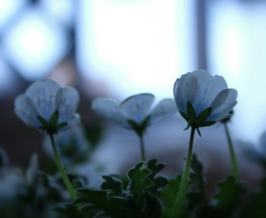 Flower Nature Flowerporn 自然 Flowers,Plants & Garden 花と庭 Nature_collection Flower Collection EyeEm Nature Lover In My Garden