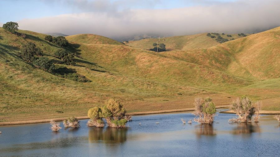 High angle landscape of lake and green rolling hills in California San Luis Reservoir Water Scenics - Nature Landscape Tranquility Plant Environment Sky Nature Day Tranquil Scene No People Land Mountain Growth Tree Non-urban Scene Cloud - Sky Waterfront Outdoors Beauty In Nature