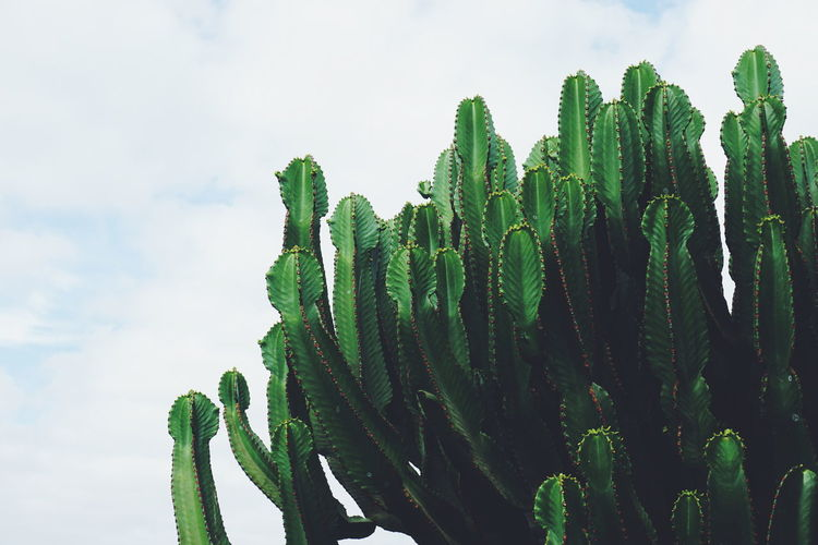 Low angle view of cactus plants against sky