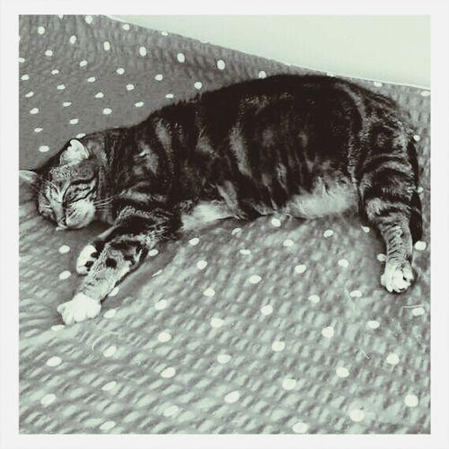 Entspannung ist da wo eine katze ist
