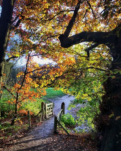 Path Tree Autumn Beauty In Nature Nature Tranquility Tranquil Scene Growth Scenics Outdoors Leaf Day Change Branch Tree Trunk No People Forest