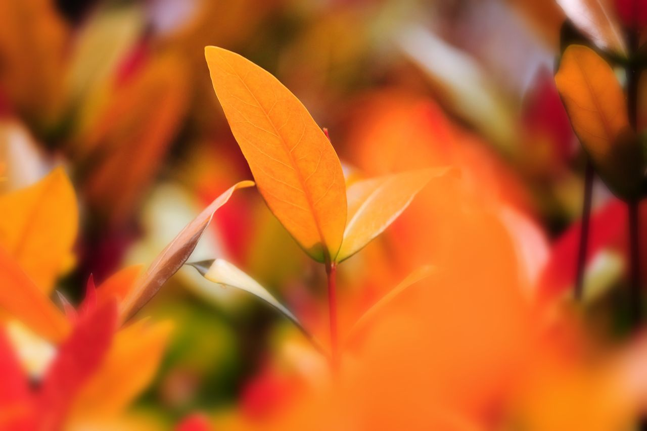 orange color, petal, flower, beauty in nature, growth, fragility, nature, freshness, flower head, close-up, blooming, leaf, day, no people, outdoors, plant, bird of paradise - plant
