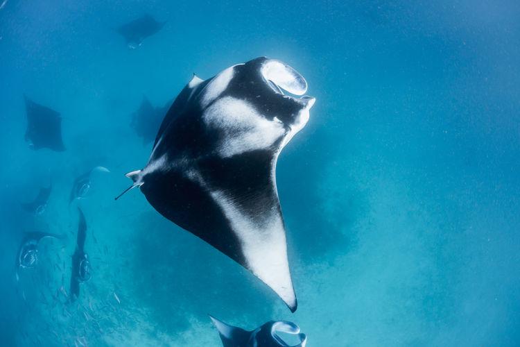 View of fish swimming underwater