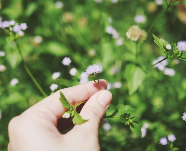 Little Flower Little Flowers Human Hand Hand Human Body Part Plant Flower Holding Flowering Plant Fragility Vulnerability  Nature Finger Beauty In Nature Close-up