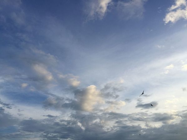 Flying Sky Cloud - Sky Mid-air Scenery Beauty In Nature Hello Bird Photography Birds_collection Low Angle View Outdoors Day Bird No People Nature Animal Themes Scenics Spread Wings Nature Photography Naturelovers Nature Collection Nature_collection My Point Of View Hello World Taking Pictures