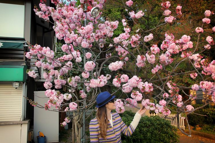 Young woman touching pink cherry blossoms outdoors